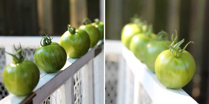 green heirloom tomatoes