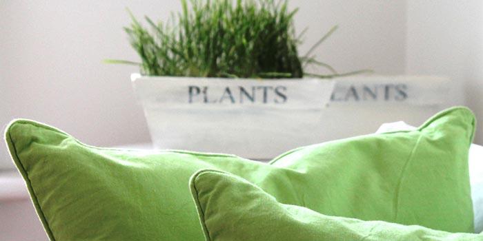 grass-in-plant-pot.jpg